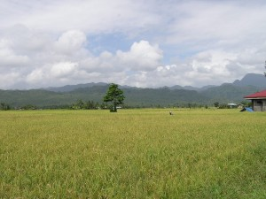 """""""Grainery of Poblacion Zone-2"""" by iannavarrete - Own work. Licensed under Public Domain via Wikimedia Commons - https://commons.wikimedia.org/wiki/File:Grainery_of_Poblacion_Zone-2.jpg#/media/File:Grainery_of_Poblacion_Zone-2.jpg"""